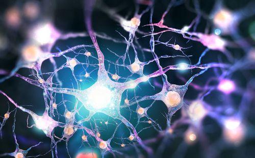 CBD a układ nerwowy