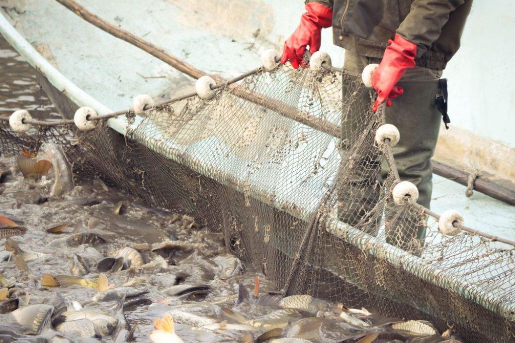 rybołówstwo