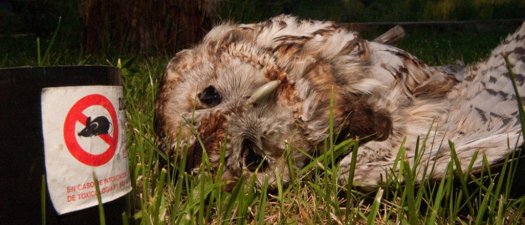 poisoned owl