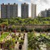 rolnictwo miejskie