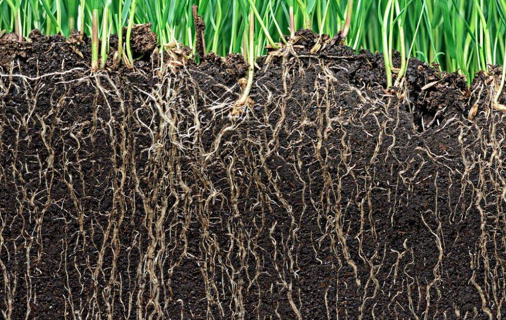 rośliny a biowęgiel