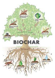 zalety biowęgla