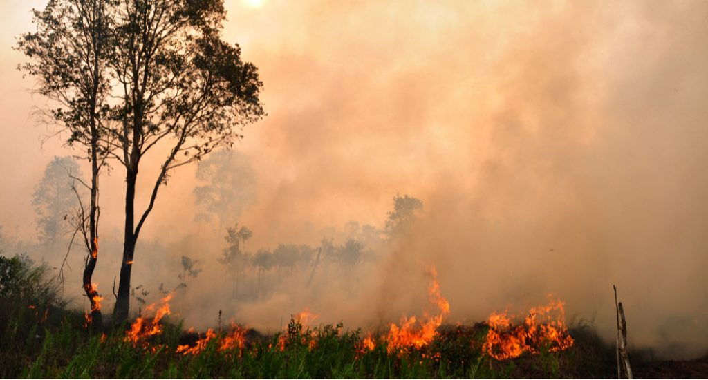 peatlands on fire