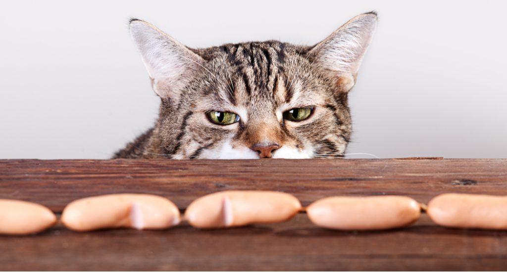 trutka na koty
