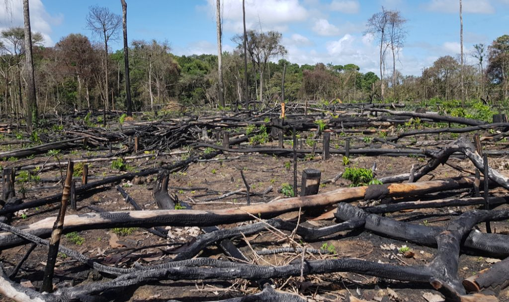 wypalanie lasów