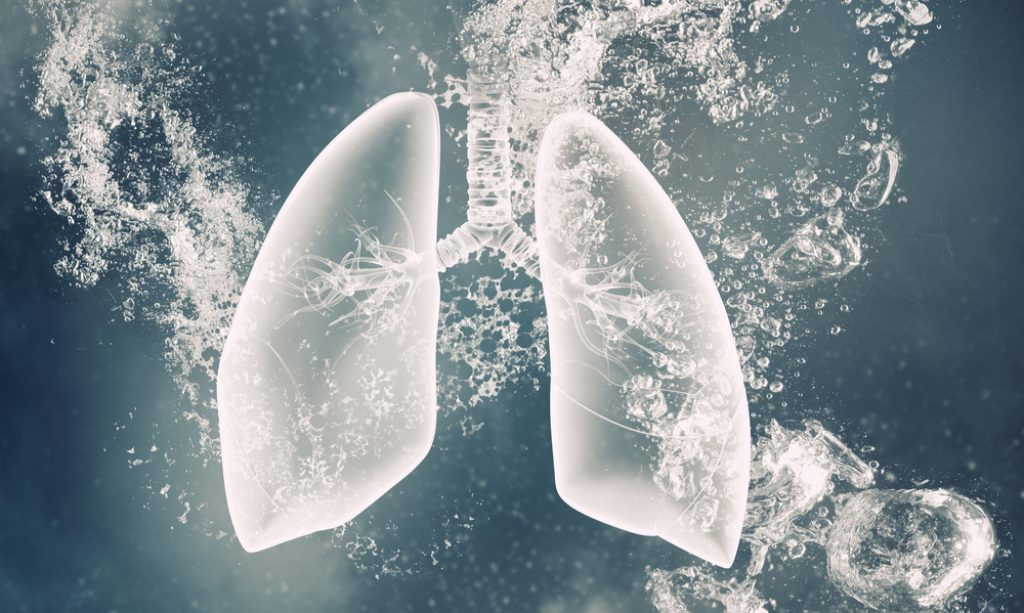 płuca ziemi