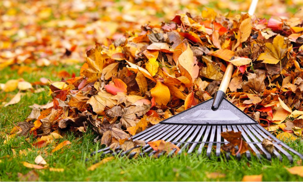 Raking leaves for the winter - necessity or a whim? - EcoReactor
