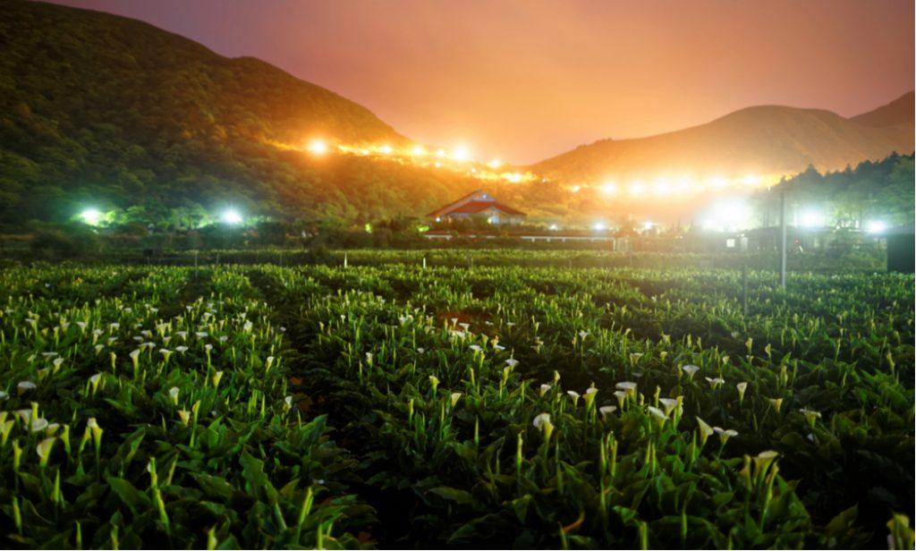 agroekosystemy