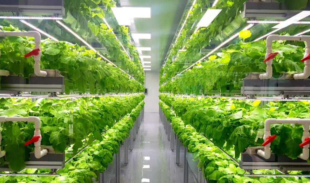 rolnictwo wertykalne