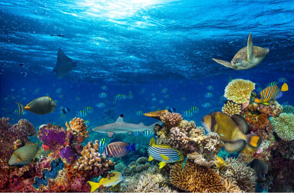 życie na rafie koralowej