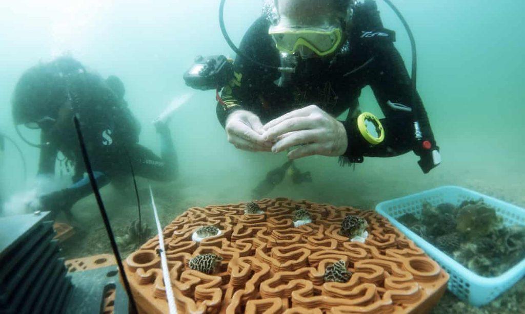 rafa koralowa 3D