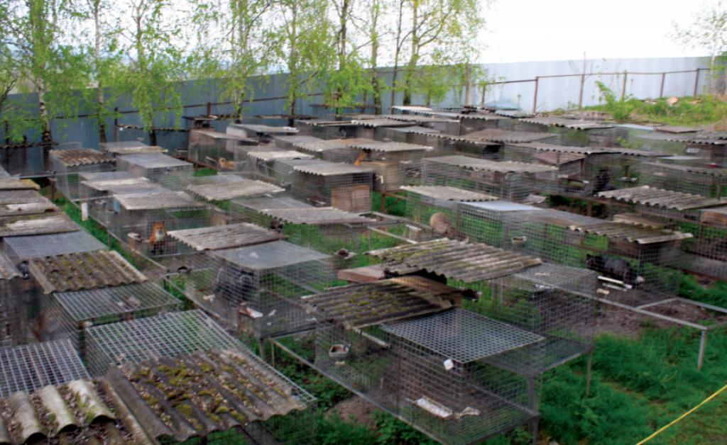 hodowla zwierząt na futra