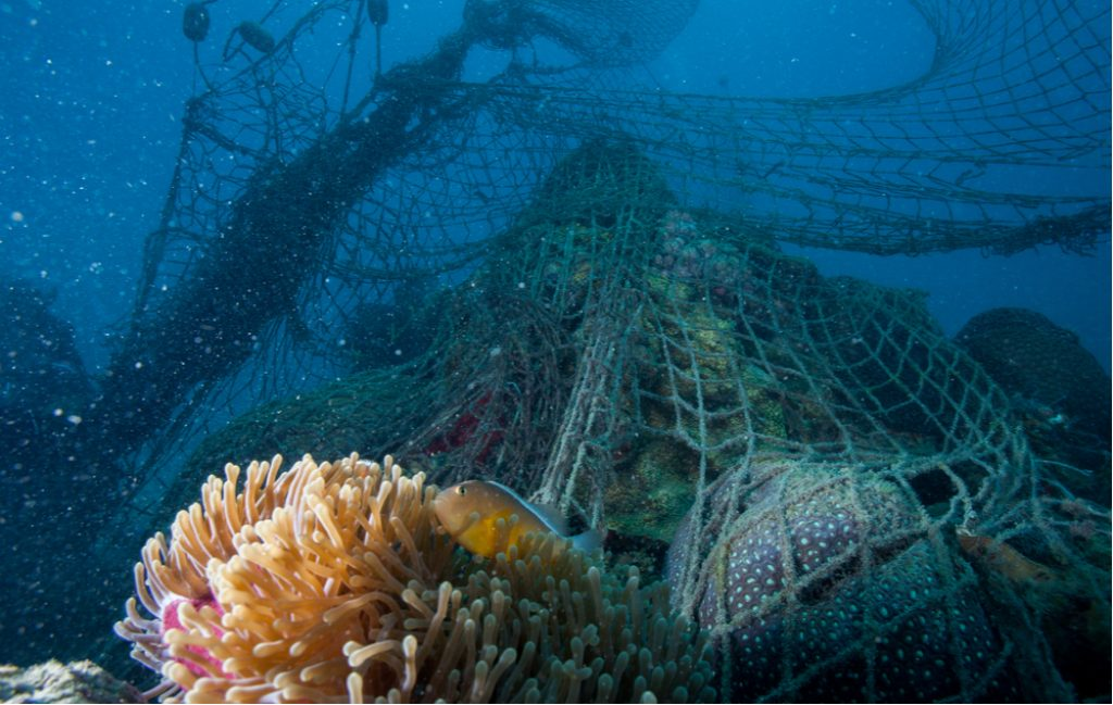 opuszczona sieć rybacka