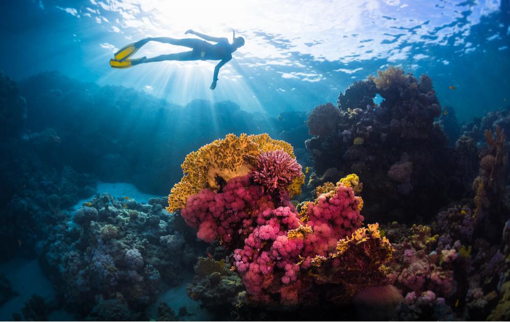 ochrona raf koralowych