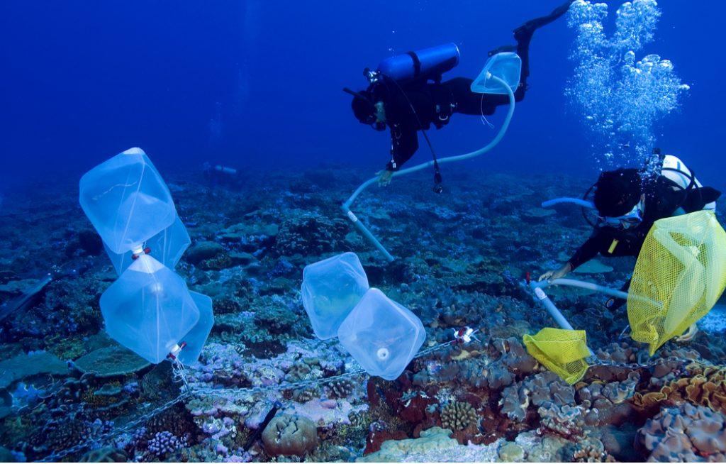badania na rafach koralowych